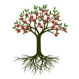 Зеленое дерево лета с яблоком корня и красного цвета приносить Illustr вектора Стоковая Фотография