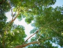 Зеленое дерево листьев предпосылка стоковое изображение rf