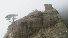 Зеленое дерево на крае скалы в тумане съемка Каменный штендер на утесе погруженном в густом тумане Мистическая атмосфера тумана о стоковое фото rf