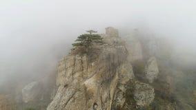 Зеленое дерево на крае скалы в тумане съемка Каменный штендер на утесе погруженном в густом тумане Мистическая атмосфера тумана о стоковые изображения rf