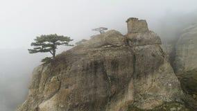 Зеленое дерево на крае скалы в тумане съемка Каменный штендер на утесе погруженном в густом тумане Мистическая атмосфера тумана о стоковое изображение rf