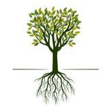 Зеленое дерево с листьями и корнями также вектор иллюстрации притяжки corel иллюстрация штока