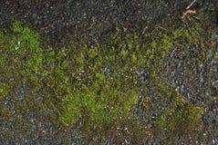 Зеленое естественное, покрытый мох, текстура утеса над каменной стеной в Великобритании Текстура и Backgroud Стоковые Изображения RF