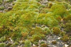 Зеленое естественное, покрытый мох, текстура утеса над каменной стеной в Великобритании Текстура и Backgroud Стоковая Фотография RF