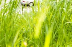 Зеленое заволакивание лугов и почвы полей стоковое фото rf