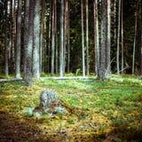 зеленое лето ландшафта Стоковое Изображение
