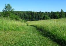 зеленое лето Стоковые Изображения RF