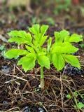 Зеленое малое дерево растет вверх естественно стоковая фотография