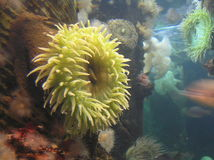зеленое море роз Стоковые Изображения