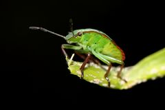 зеленое насекомое Стоковое Изображение