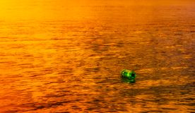 Зеленое одиночество на заходе солнца Стоковые Фото