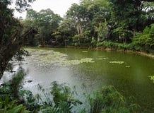 Зеленое озеро и ливневый ливень в тропическом лесе стоковое изображение rf