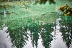 Зеленое озеро отражая елевые деревья стоковая фотография rf