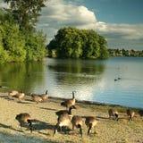 зеленое озеро seattle Стоковые Изображения RF