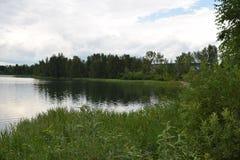 Зеленое побережье озера стоковые изображения