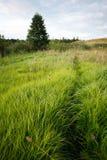 Зеленое поле в сельской местности Стоковые Изображения