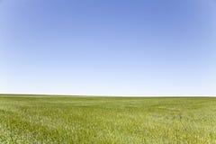 Зеленое поле, голубое небо Стоковая Фотография RF