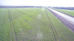 Зеленое поле земледелия Стоковые Фотографии RF