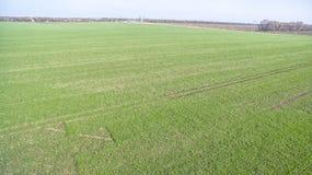 Зеленое поле земледелия Стоковая Фотография RF