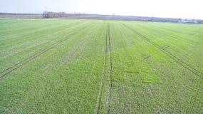 Зеленое поле земледелия Стоковое Фото