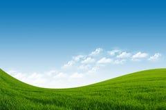 Зеленое поле и голубое небо Стоковые Изображения