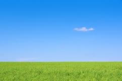 Зеленое поле и голубое небо Стоковая Фотография RF