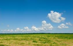 Зеленое поле и голубое небо стоковая фотография