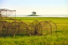 зеленое поле и малое река середины острова Стоковые Фото