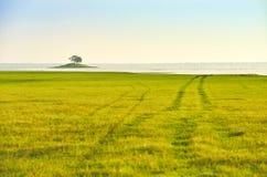зеленое поле и малое река середины острова Стоковая Фотография