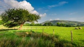 Зеленое поле и старая загородка, озеро район Стоковое Изображение