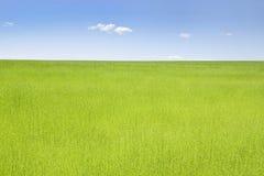 Зеленое поле льна Стоковое Изображение
