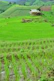 Зеленое поле риса в горе Стоковое Изображение