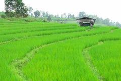 Зеленое поле риса в горе Стоковая Фотография