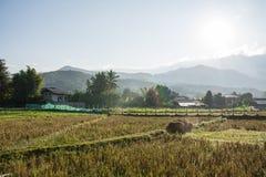 Зеленое поле риса в Pua Стоковая Фотография