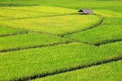 Зеленое поле риса на долине горы стоковое фото