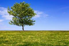 Зеленое поле с деревом Стоковое фото RF