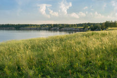 Зеленое поле с колосками на речном береге Стоковое Изображение RF
