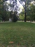 Зеленое поле травы внутри Стоковые Изображения RF