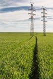 Зеленое поле хлопьев с опорами электричества стоковая фотография rf