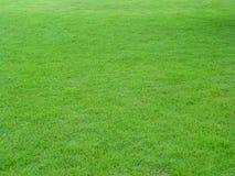 Зеленое поле Стоковые Фотографии RF