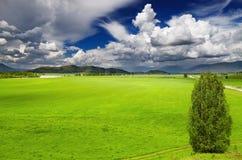 Зеленое поле стоковые изображения