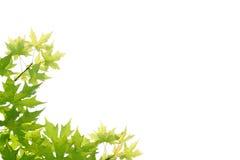 зеленое разрешение Стоковая Фотография