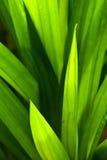 зеленое разрешение Стоковая Фотография RF