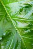 зеленое разрешение Стоковые Фотографии RF
