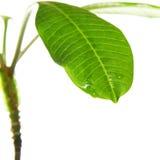 зеленое разрешение Стоковое Изображение RF