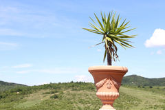 Зеленое растение в баке с горами Стоковые Изображения