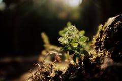 Зеленое растение в горах стоковое фото