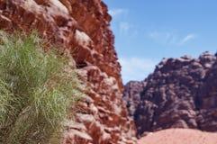 Зеленое растение в оазисе пустыни стоковая фотография
