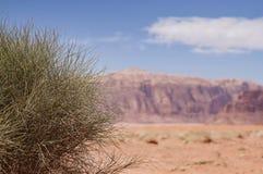 Зеленое растение в оазисе пустыни стоковые изображения