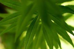 Зеленое растение в саде стоковые фото